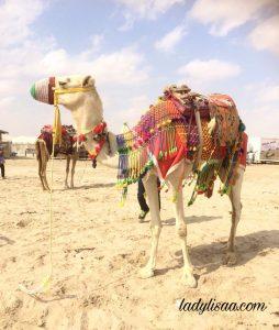 padang pasir doha