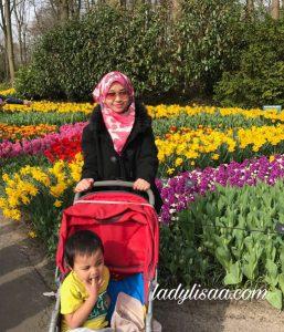bunga tulip amsterdam